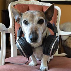 Ein Hund mit einem Kopfhörer auf dem Kopf