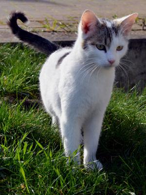 Foto mite einer Katze im Gras