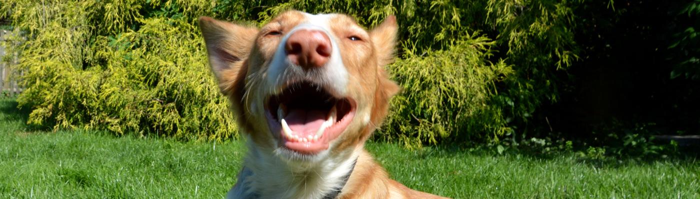 Foto eines Hundes auf einer Wiese