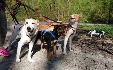 Foto mit einer Gruppe Hunde